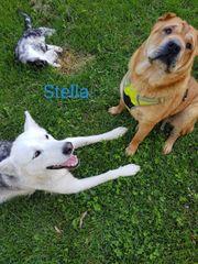 Die zuckersüße Stella sucht ihr