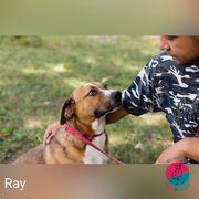 Ray - Auf der Suche nach