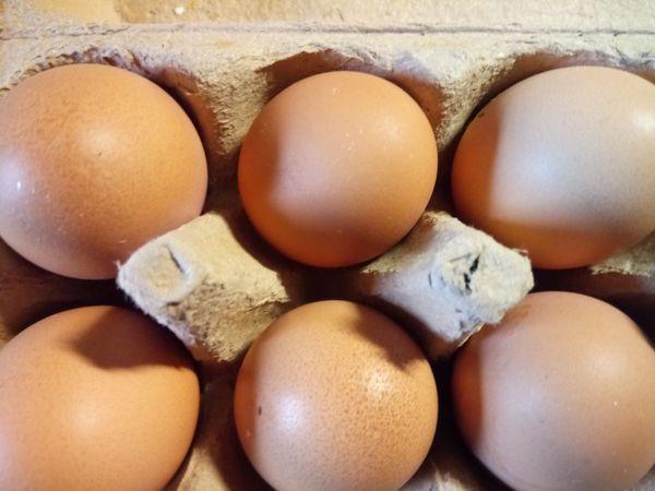 Eier ab Hof