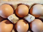 Eier ab Hof ohne Chemie