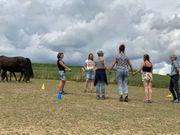 Weiterbildung Refresh Pferdegestütztes Coaching