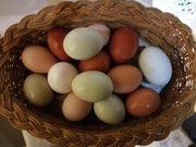 Frische bunte Hühner Eier