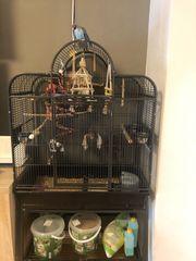 große Vogel Käfig