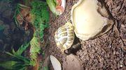 Terrarium mit Schildkröte zu verkaufen