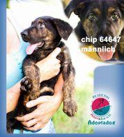 Chip 64647 - bist du meine
