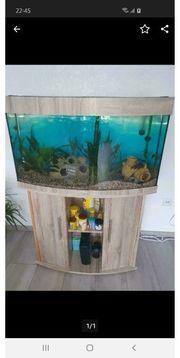 Aquarium Juwel Vision 180 Liter