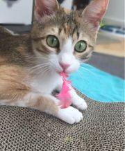 Kleine Katzendame schweren Herzens abzugeben