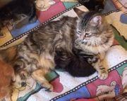 Leonie und ihre Kinder - eine