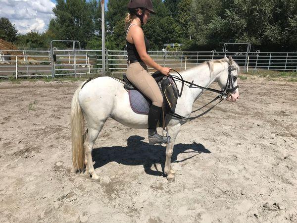 Schicke Araber-Pony-Stute 12 jährig Stm