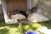 Katzenbabys Kostenlos ab zugeben
