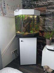 Aquarium zu verkaufen mit besatz