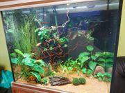 Aquarium komplett