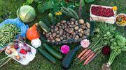 Suche Gartengrundstück zur Miete Pacht