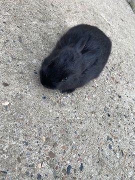 Kleintiere - Kaninchenbaby