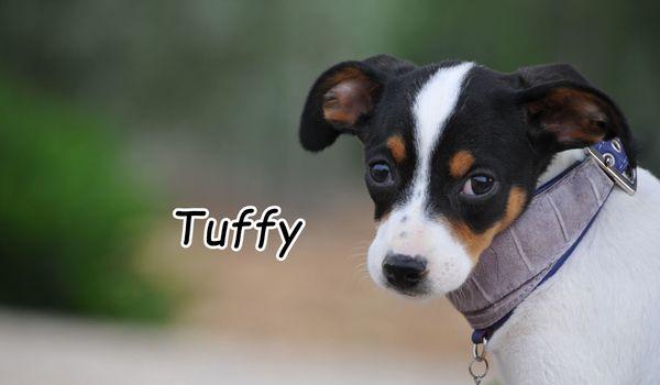 Darf Tuffy, den Wunsch nach einer Familie von seiner Wunschliste streichen? ? ?