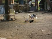 2 Minischweine