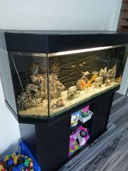 Aquarium 260l mit Unterschrank