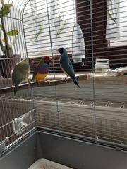 Vögel mit Käfig exotich