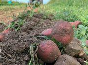 Gartenparzelle auf Ackerboden für Gemüseanbau