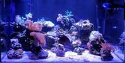 Meerwasser Aquarium wird aufgelöst - Alles