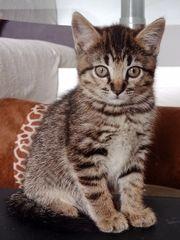 super süße kleine Kätzchen