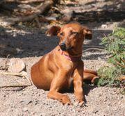 Nina - Hündin aus dem Tierschutz