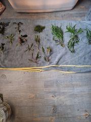 Kleines Pflanzenpaket