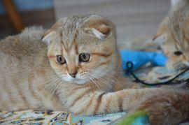 Katzen In Germersheim Kaufen Und Verkaufen Bei Quokade