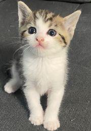 Main-Conn Mix Kitten suchen ab
