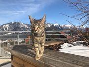Katze auf der Suche nach