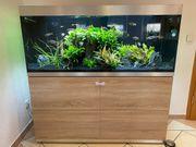 Sehr gepflegtes 400L Oase Aquarium