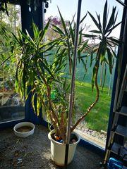 Zimmerpflanzen zu verschenken