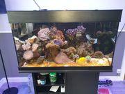 Meerwasseraquarium Percula 100 Komplett mit