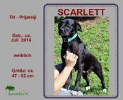 SCARLETT - möchte unbedingt das Familienleben