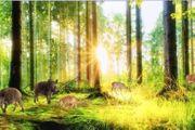 Bühnenbild Odenwald Wald Landschaft Tiere