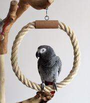 Papageienspielzeug RINGSCHAUKEL 30cm Ø Sisal