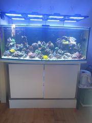 Komplettes Meerwasser Aquarium 650 Liter