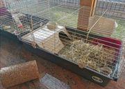 meerschweinchen mit käfig