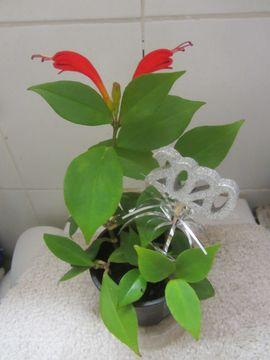 Pflanzen - Korbpflanze oder orangeblühend auch genannt