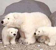 Plüschtiere sammeln Eisbären