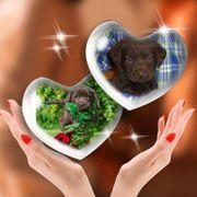 Wurfankündigung Labrador Welpen in braun