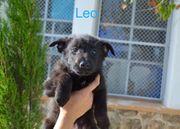 Leo - Welpe im Tierheim