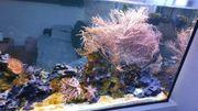 Aquarium Meerwasser 700l