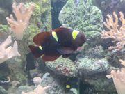Meerwasseraquarium Inhalt Fische