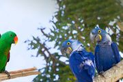 suche Papagei für liebevolle Hände