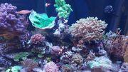 Verkaufe Meerwasser Aquarium 500 Liter