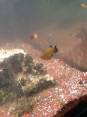 süswasser aqarium besatz abzugeben