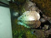 Wasserschildkröten Aquarium Unterschrank Wasserfilter