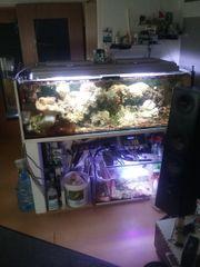 Meerwasser Aquarium ca 500 l