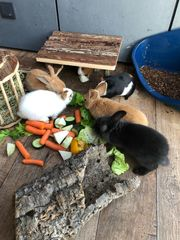 Private Unterstützung bei der Kleintierbetreuung